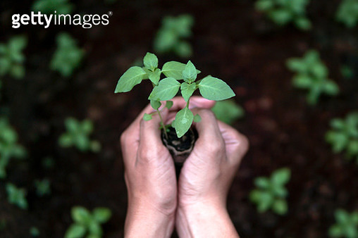 Close-Up Of Hands Holding Plant - gettyimageskorea