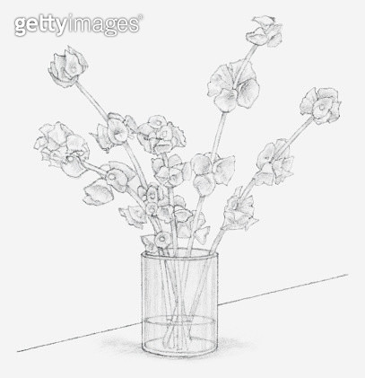Black and white illustration of Moluccella stems in a vase containing glycerine and water mixture, after 10 days (preserving flowers) - gettyimageskorea