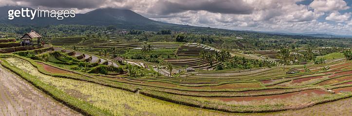Rice Field Bali - gettyimageskorea