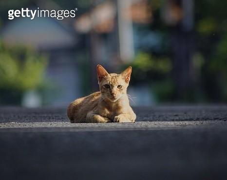 Portrait Of Cat Sitting On Road - gettyimageskorea