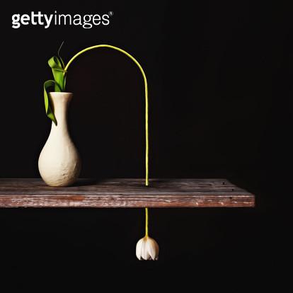Surreal Tulip Still Life on Black - gettyimageskorea