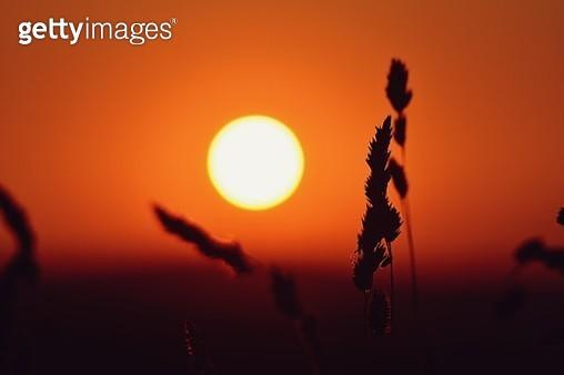 Summer sunset - gettyimageskorea