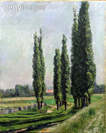 <b>Title</b> : Poplars on the Riverbank at Argenteuil (oil on canvas)Additional Infopeupliers sur la digue d'Argenteuil;<br><b>Medium</b> : <br><b>Location</b> : Private Collection<br> - gettyimageskorea