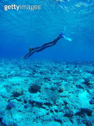 Diver in Deep Blue Sea - gettyimageskorea