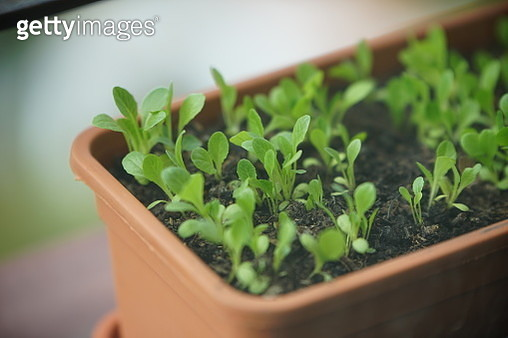 Close-Up Of Potted Plant - gettyimageskorea