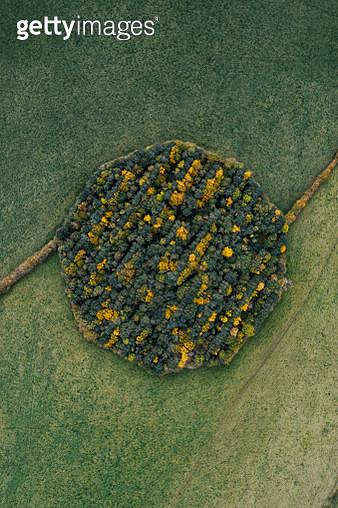 Drone shot above a circular woodland during autumn, England, United Kingdom - gettyimageskorea