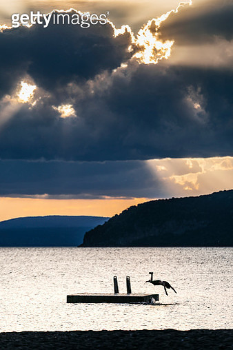 A boy dives into Lake Taupo from a platform - gettyimageskorea