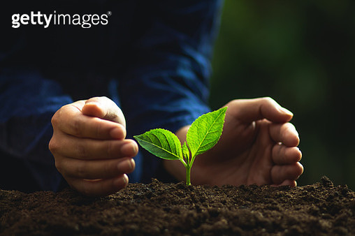 Midsection Of Person Planting Seedlings - gettyimageskorea