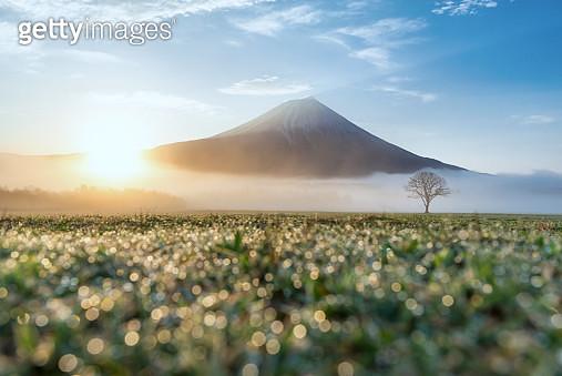 Mt.Fuji, Japan - gettyimageskorea