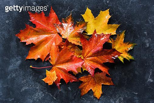 Colorful fallen maple leaves - gettyimageskorea