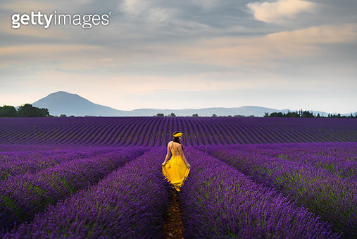 Young woman in the lavender field, Provence, France - gettyimageskorea