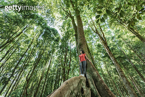 Asia, Indonesia, Bali, Young Asian woman standing in tropical tree, inside a tropical rainforest setting, low angle - gettyimageskorea