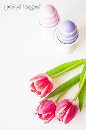 Painted Easter eggs in egg cups and fresh pink tulips on white background. Isolated on white. Image with copy space. - gettyimageskorea