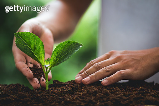 Close-Up Of Hands Planting Leaves - gettyimageskorea