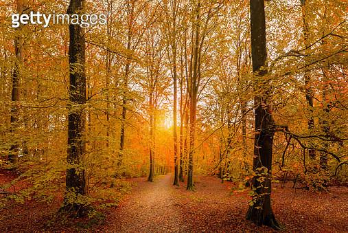 Autumn Glory - gettyimageskorea