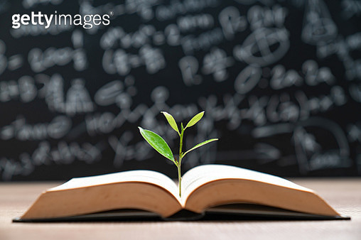 Tree Growth of knowledge on book for sustainable education and environment concept - gettyimageskorea