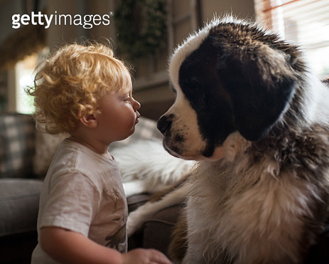 Side view of cute baby boy looking at Saint Bernard face to face in living room - gettyimageskorea