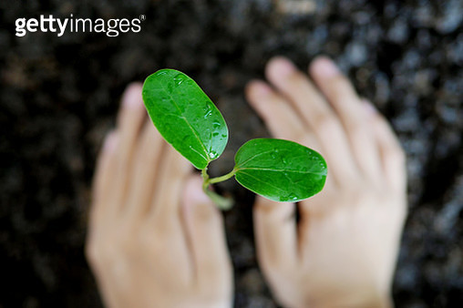 Cropped Image Of Hand Planting Seedling - gettyimageskorea
