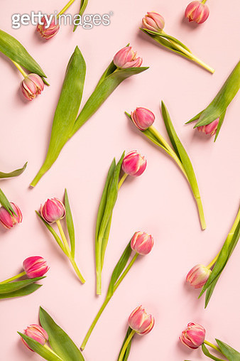 Directly Above Shot Of Tulips On Pink Background - gettyimageskorea