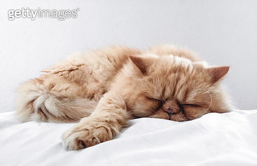 Close-Up Of Cat Sleeping On Bed - gettyimageskorea