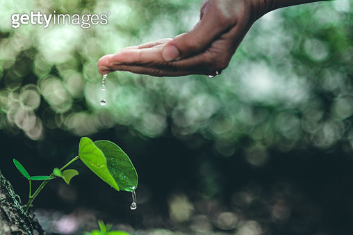 Cropped Hand Of Person Watering Plant Against Blurred Background - gettyimageskorea