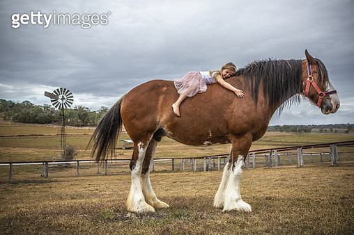 Small girl lying on huge Clydesdale horse - gettyimageskorea