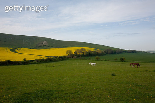 Horses in field with Long Man of Wilmington in background - gettyimageskorea