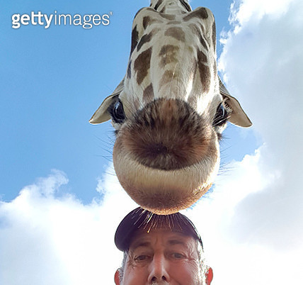 Portrait Of Man And Giraffe Against Sky - gettyimageskorea