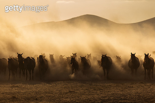 Landscape of wild horses running at sunset with dust in background. - gettyimageskorea