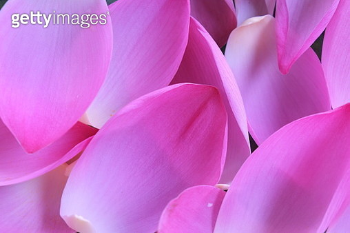 Close-Up Of Pink Flowers - gettyimageskorea