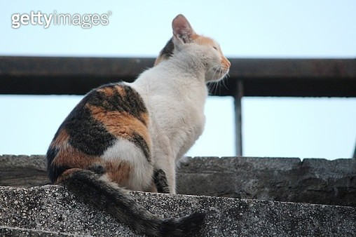 Cat Sitting On Retaining Wall Against Sky - gettyimageskorea