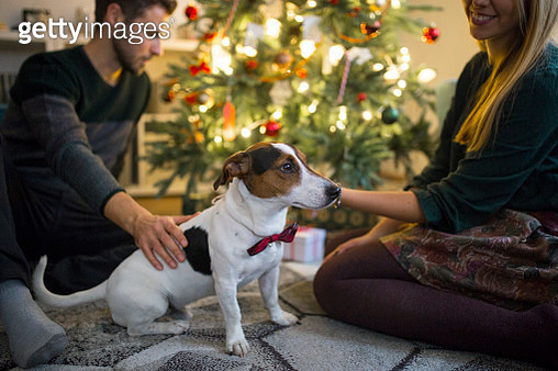 Happy couple with dog  waiting for the New Year - gettyimageskorea