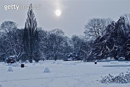 Frozen trees - gettyimageskorea