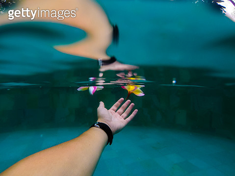 Underwater view of a guy diving in swimming pool touching a nice colorful Frangipani flower floating on water during travel vacations in Bali. - gettyimageskorea