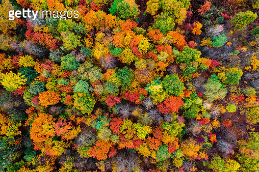Aerial view of the autumn forest. Autumn foliage colors - gettyimageskorea
