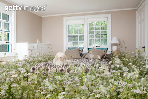 Dog in bedroom with wildflowers - gettyimageskorea
