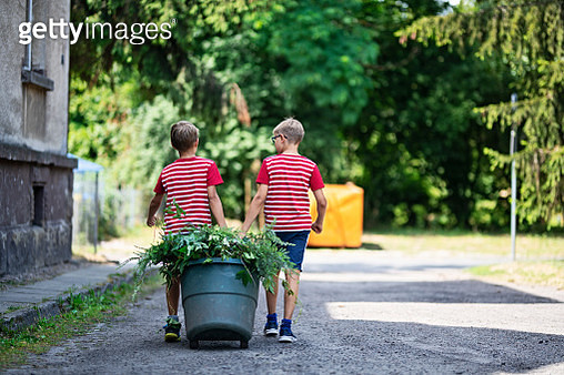 Two boys pulling some weeds and pruned plant branches to compost bin. Nikon D850 - gettyimageskorea