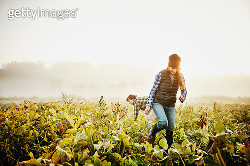 Smiling female farmers harvesting organic squash - gettyimageskorea