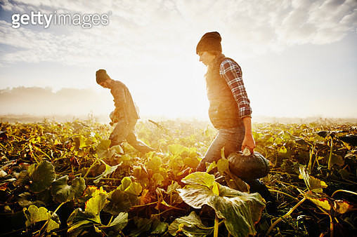 Farmers carrying organic squash during harvest - gettyimageskorea