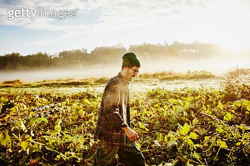 Organic farmer walking through field - gettyimageskorea