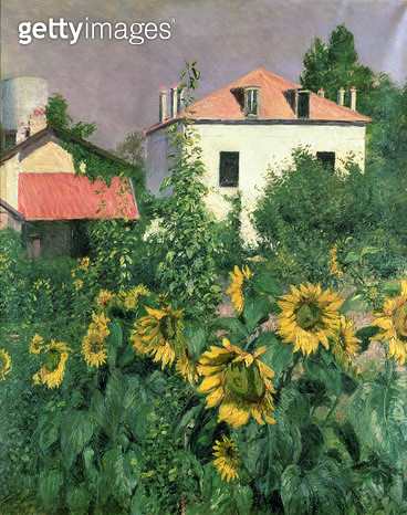 <b>Title</b> : Sunflowers in the Garden at Petit Gennevilliers (oil on canvas)Additional InfoLes Soleils, jardin du Petit Gennevilliers;<br><b>Medium</b> : <br><b>Location</b> : Private Collection<br> - gettyimageskorea