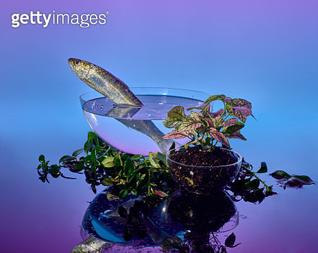 Fish jumping out of a bowl surrounded by plants - gettyimageskorea