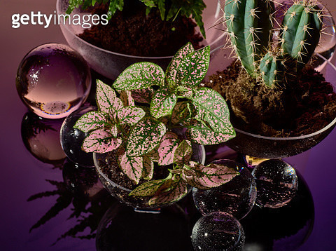 Plants in soil with crystal balls in pink - gettyimageskorea