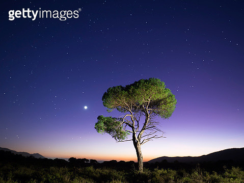 Landscape with the silhouette of an alone solitary tree in a great plain, one night with crepuscular light  with the full moon. Bocairent,  Valencian Community, Spain. - gettyimageskorea