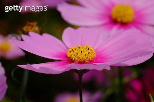Flower - gettyimageskorea
