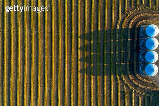 View from directly above of four large metal grain bins and canola harvest lines at sunset with long shadows - gettyimageskorea