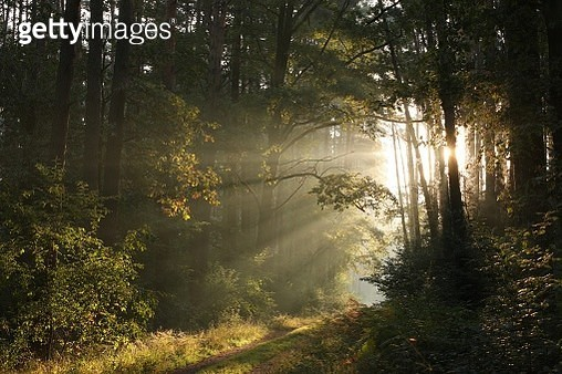 Path Through A Misty Autumn Forest - gettyimageskorea