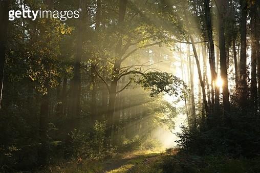 Path Through An Autumn Forest - gettyimageskorea