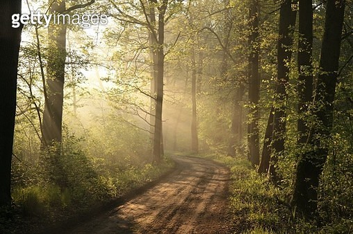 Dirt Road Through The Spring Forest - gettyimageskorea