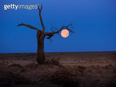 A full moon in Mongolia, Asia. - gettyimageskorea